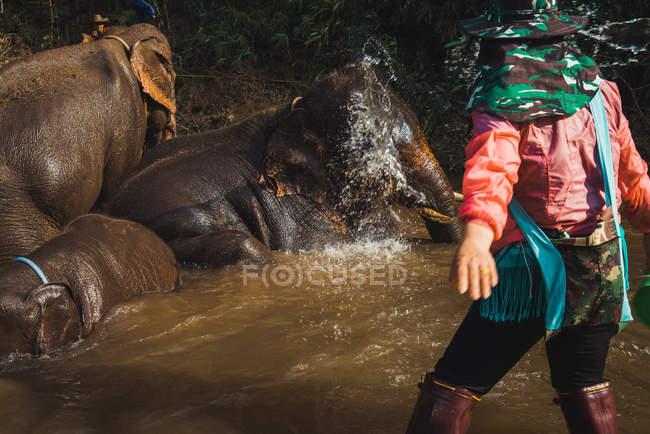 Rückansicht des Guide am Wasser mit Elefanten stehen — Stockfoto