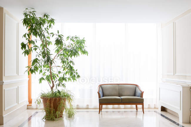Tall potted plant by armchair in hotel — Stock Photo