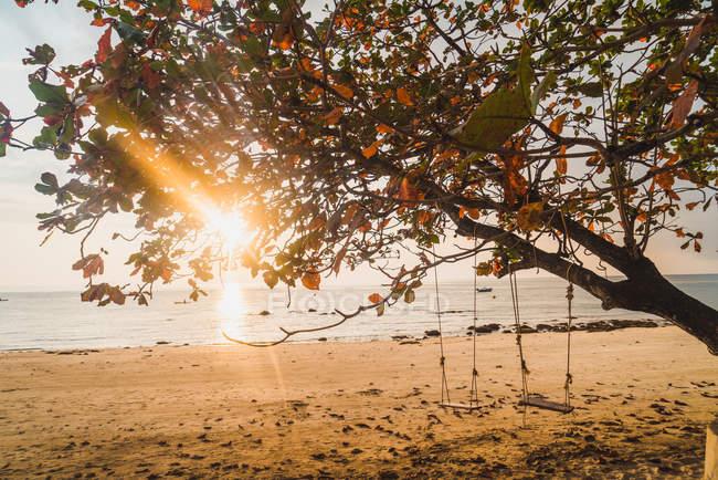 Sun beams penetrating through green tree at seaside — Stock Photo