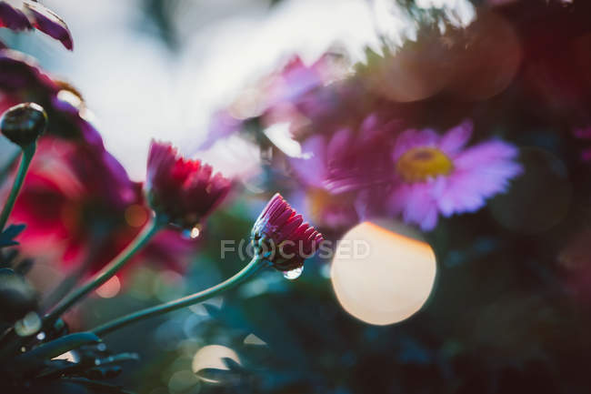 Close up view of colorful blooming wild flowers in spring — Stock Photo