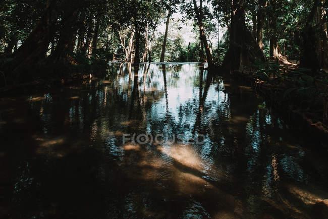 Безмятежный пруд в солнечный тропический лес — стоковое фото