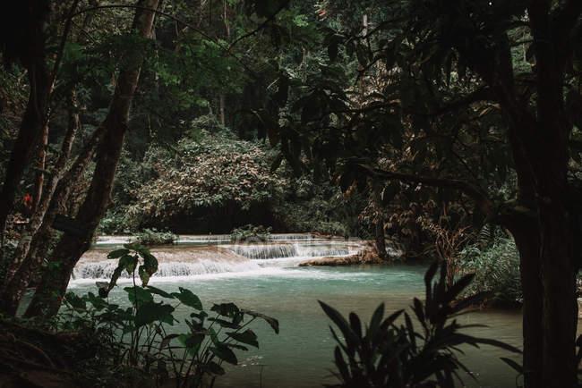 Étang tropical avec cascade cascade en forêt — Photo de stock