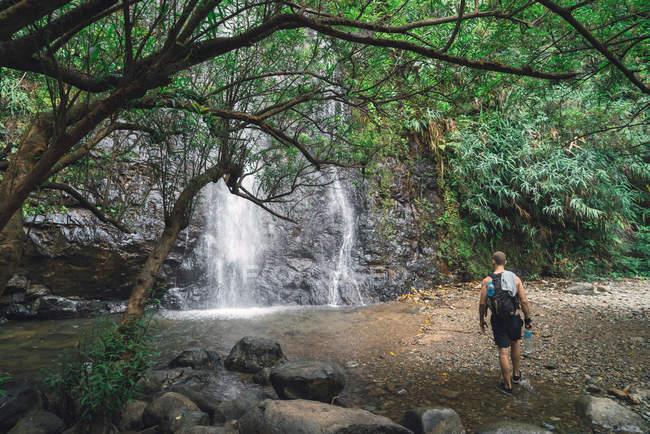 Vista trasera del hombre turismo caminando a la cascada en el bosque - foto de stock