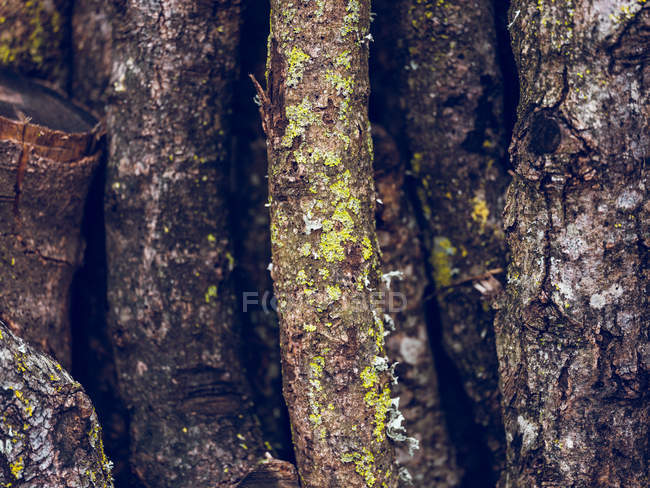 Marco completo tiro ramas de madera con musgo en la corteza - foto de stock