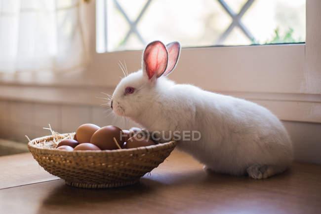 Зайчик Пизанской o корзина с куриные яйца — стоковое фото