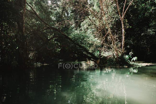 Красивые небольшое озеро в зеленых тропических лес в Солнечный день — стоковое фото
