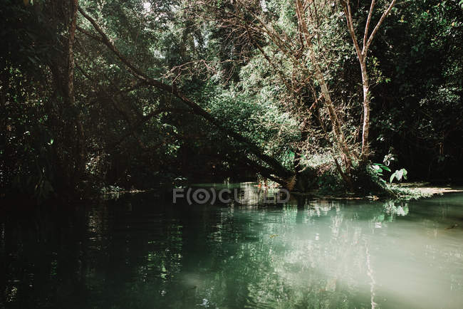 Beautiful small lake in green tropical forest in sunny day. — Stock Photo