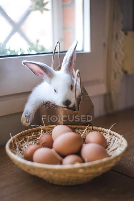 Чаша с яйца перед милый белый кролик в получении из бумажный мешок — стоковое фото