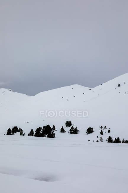 Ландшафт снежные холмы и деревья за мрак небо — стоковое фото