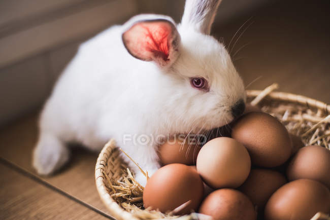 Adorable white hare standing at straw bowl with brown chicken eggs. — стоковое фото