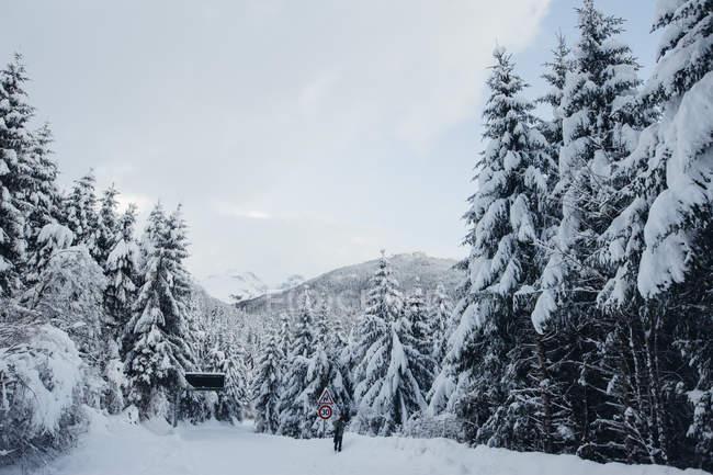 Еловый лес и деревья, покрытые снегом в зимний день — стоковое фото