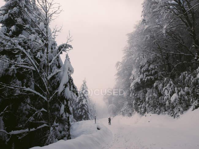 Отдаленное представление о человека, идущего на лесной дороге на зимний день — стоковое фото