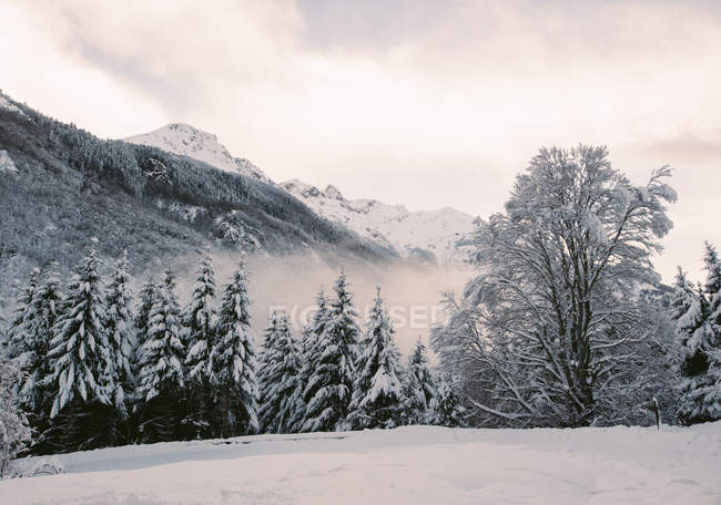 View to snow-covered fir trees in winter day. — Photo de stock
