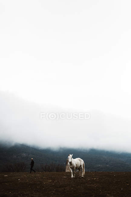 White horse in hillside against foggy background — Stock Photo