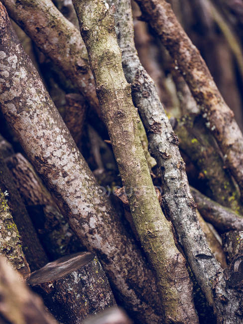 Close up view of wooden branches leaned on wall — Stock Photo