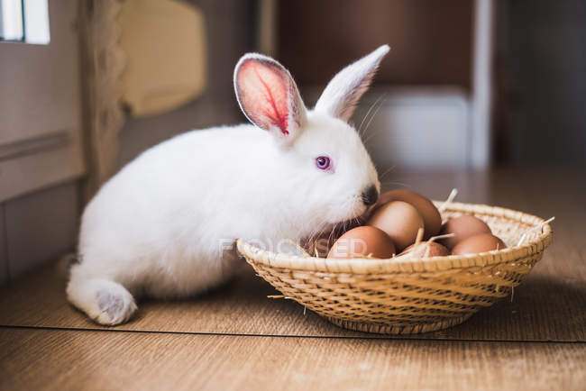 Little hare at straw bowl with chicken eggs — Stock Photo