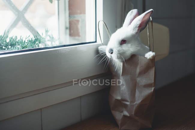 Мило белый кролик в бумажный пакет, окна — стоковое фото