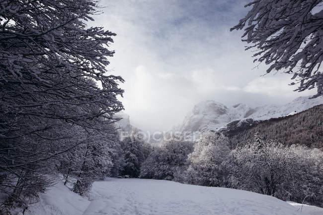 Vue sur la forêt de sapin recouvert de neige dans la journée d'hiver. — Photo de stock