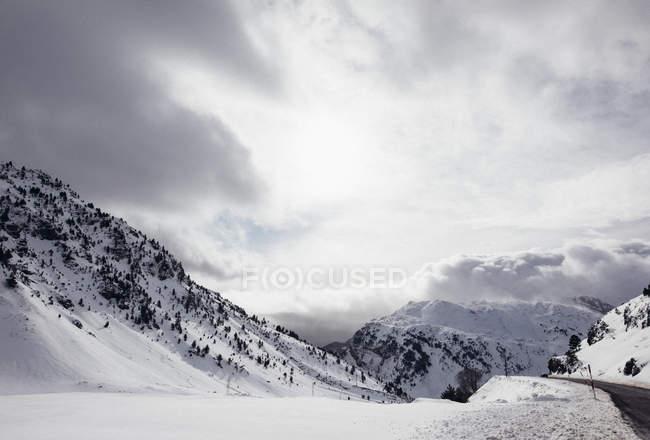 Пейзаж ельник деревья, покрытые снегом в Зимняя природа — стоковое фото