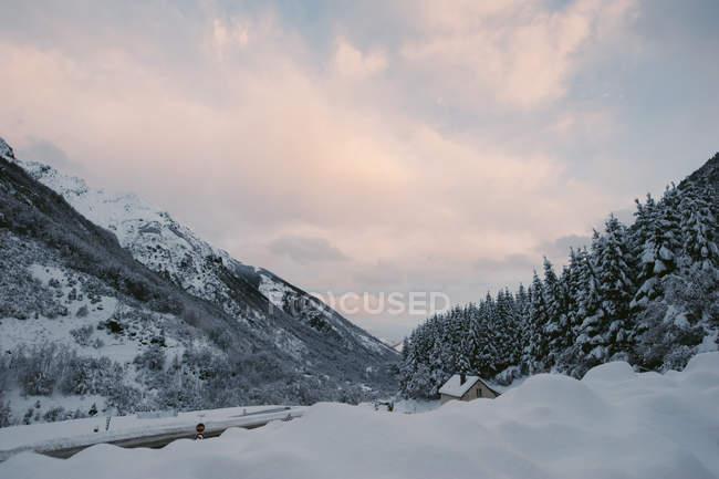 Vue sur sapin forêt couverte de neige en journée d'hiver . — Photo de stock