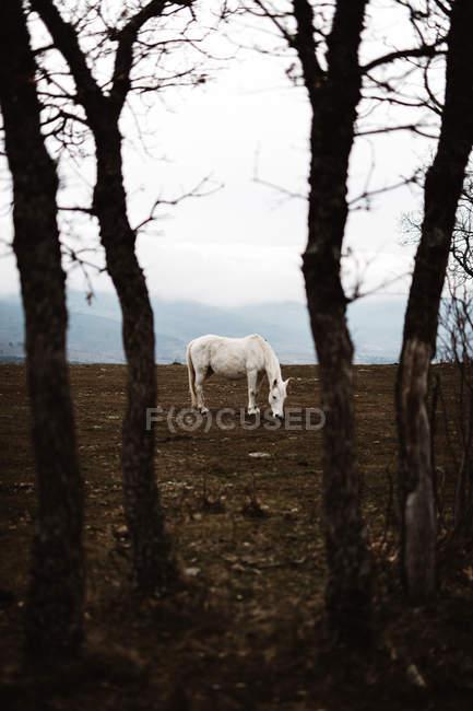 Cavallo bianco in collina contro il paesaggio nebbioso — Foto stock