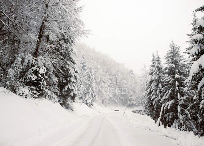 Vue sur la route parmi les sapins couverts de neige en journée d'hiver . — Photo de stock