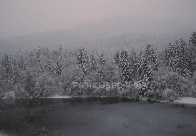 Vue sur lac, hiver avec sapinière arbres à rive. — Photo de stock