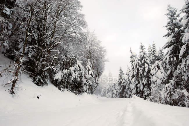 Сельские дороги покрыты снегом среди елей в зимний день — стоковое фото