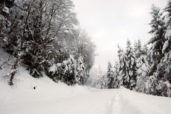 Rural road covered with snow among fir trees in winter day. — Stock Photo