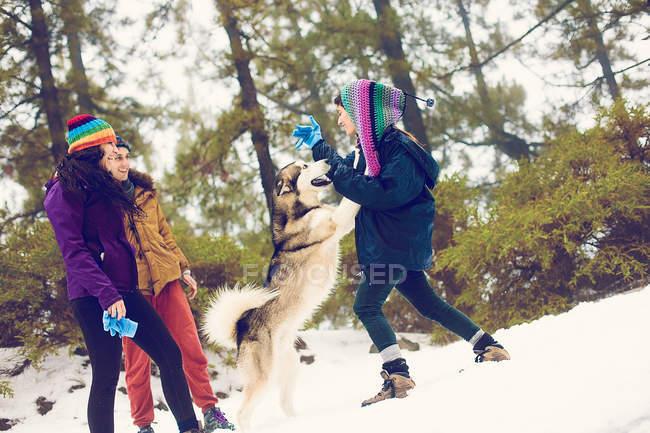 Grupo de amigos alegres, acariciando o cão em Neves — Fotografia de Stock