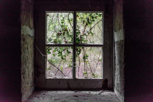 View to branches with green leaves in small rustic window. — Stock Photo