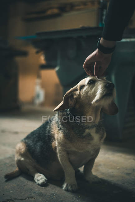 Hand stroking old dog — Stock Photo