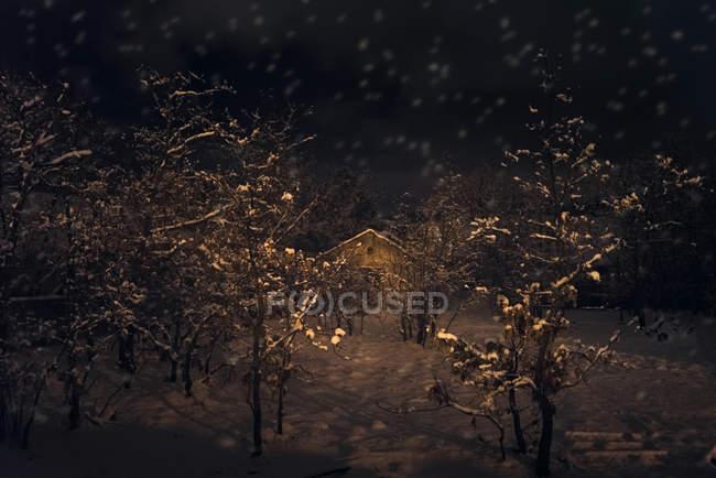Cabaña en el bosque durante la noche - foto de stock
