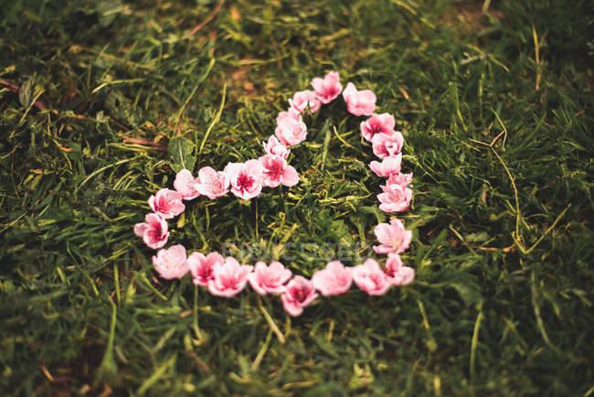 Coração feito de flores cor de rosa — Fotografia de Stock