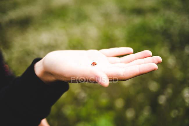 Ladybird на женской руке — стоковое фото
