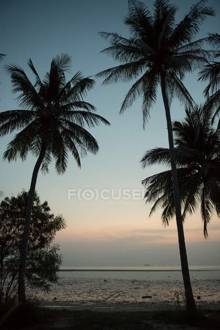 Palms and sandy beach at seaside — Stock Photo