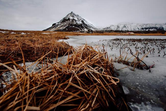 Сухая трава и снежные горы — стоковое фото