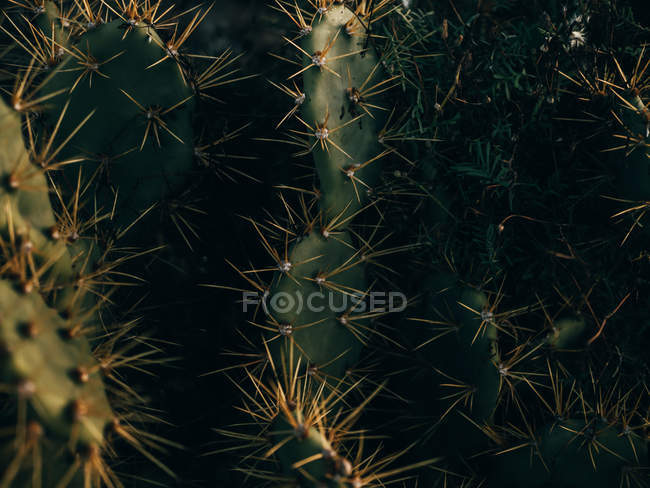 Nahaufnahme stacheliger Kaktus — Stockfoto