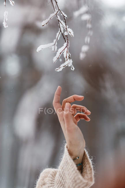 Hand touching hoarfrost branch — Stock Photo