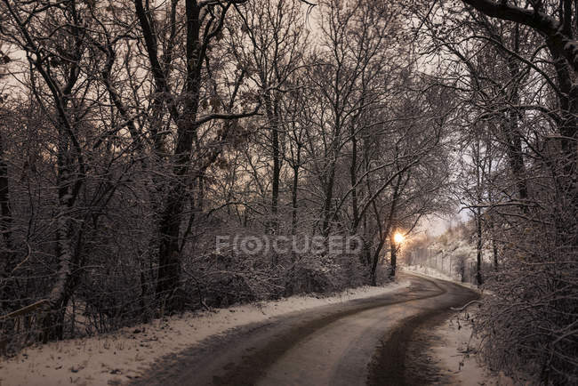 Icy country road in forest — Stock Photo