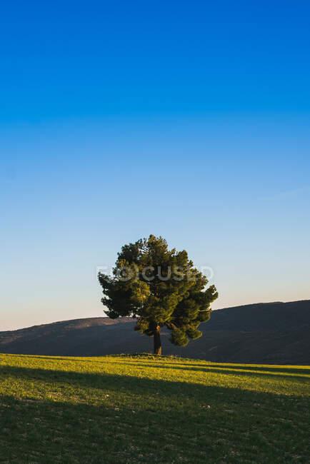 Singolo albero verde lussureggiante che cresce in altopiani su prato verde con bel cielo blu su sfondo. — Foto stock