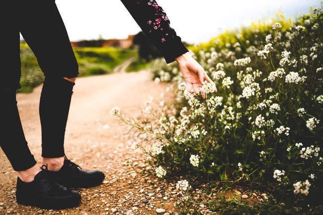 Жінка зворушливі квіти на узбіччі дороги — стокове фото