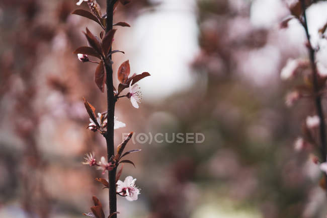 Branch with soft pink flowers — Stock Photo