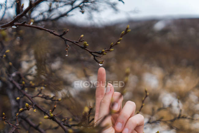 Human hand touching spring buds — Stock Photo