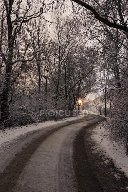 Крижані сільська дорога в лісі — стокове фото