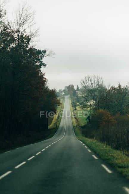 Strada asfaltata immersa nel verde — Foto stock