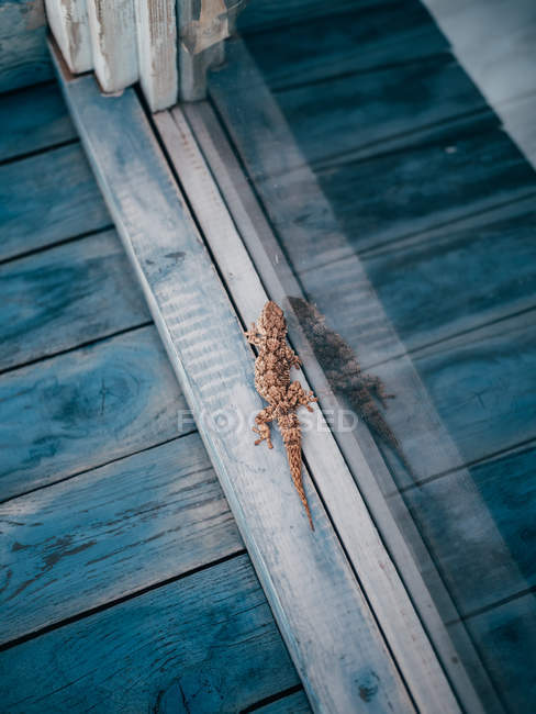 Small lizard creeping on window — Stock Photo