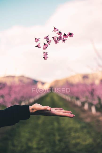 Рука вирвало рожеві квіти — стокове фото