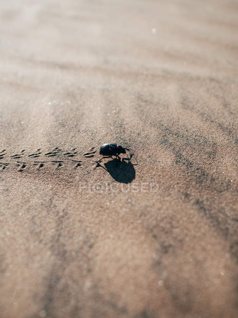 Small bug walking on sand — Stock Photo
