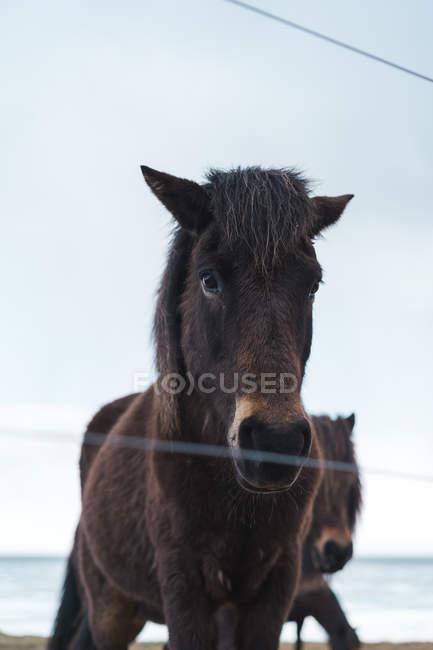 Коня, стоячи в природі — стокове фото